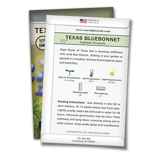 Texas Bluebonnet Back