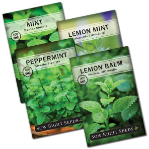 mint garden seed collection