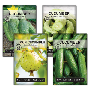 Cucumber Seed Collection