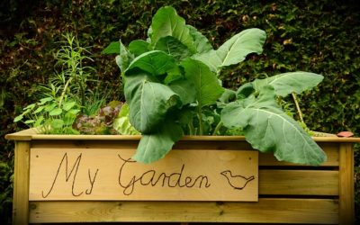 Gardening in Containers for Beginners: Benefits & Quick Start Guide